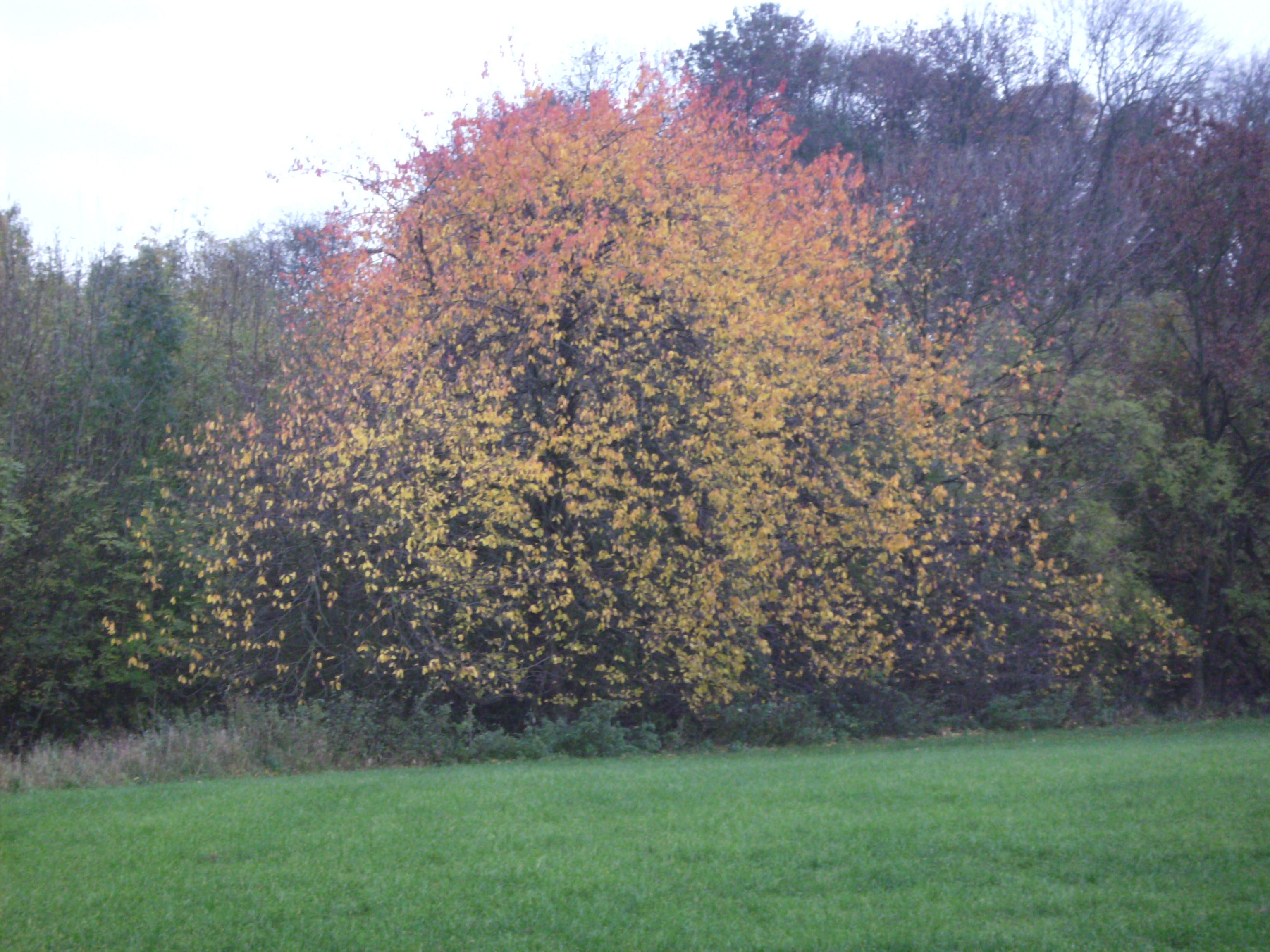 34bc89f9c13 7 november 2010. Ieder jaargetijde heeft zo zijn charme. We zitten nu in de  herfst en dat heeft ook zijn bekoring. De prachtige herfstkleuren waarmee  de ...